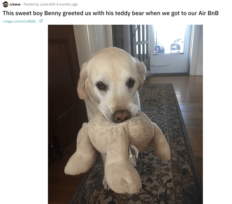 airbnb pet - Dog - r/aww Posted by u/cdc420 4 months ago This sweet boy Benny greeted us with his teddy bear when we got to our Air BnB i.imgur.com/X108Q...