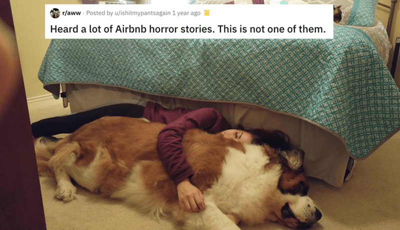 airbnb pet - Vertebrate - r/aww Posted by u/ishitmypantsagain 1 year ago Heard a lot of Airbnb horror stories. This is not one of them.