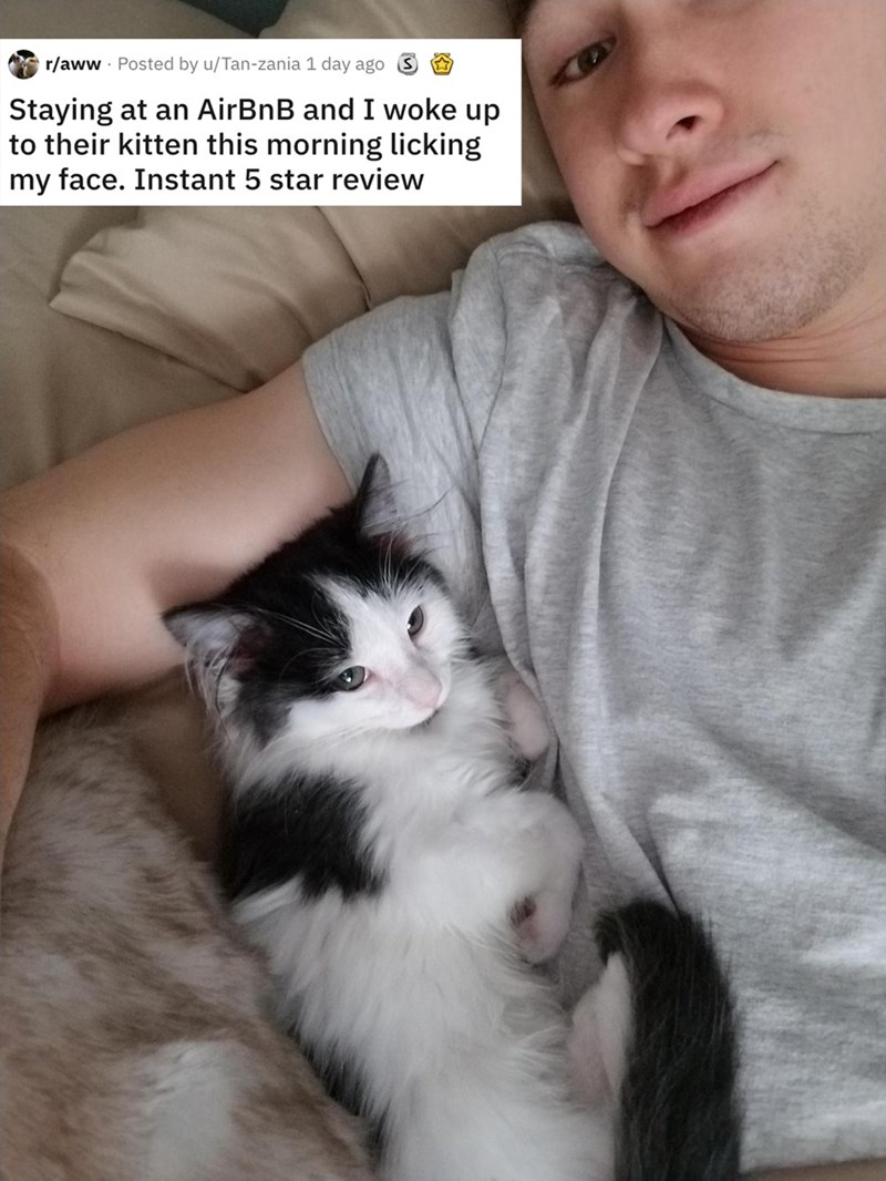 airbnb pet - Cat - r/aww Posted by u/Tan-zania 1 day ago S Staying at an AirBnB and I woke up to their kitten this morning licking my face. Instant 5 star review
