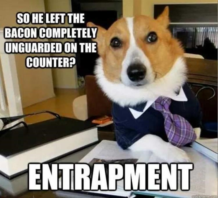 dog meme - Dog - SO HE LEFT THE BACON COMPLETELY UNGUARDED ON THE COUNTER? ENTRAPMENT emam