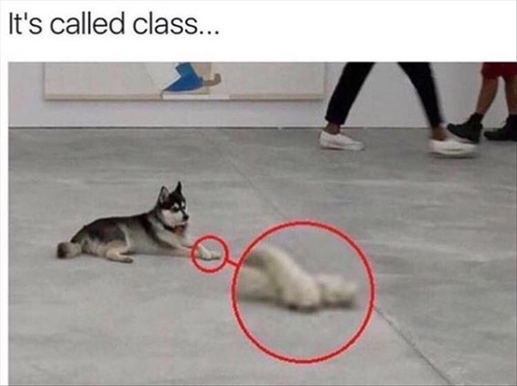 dog meme - Vertebrate - It's called class...