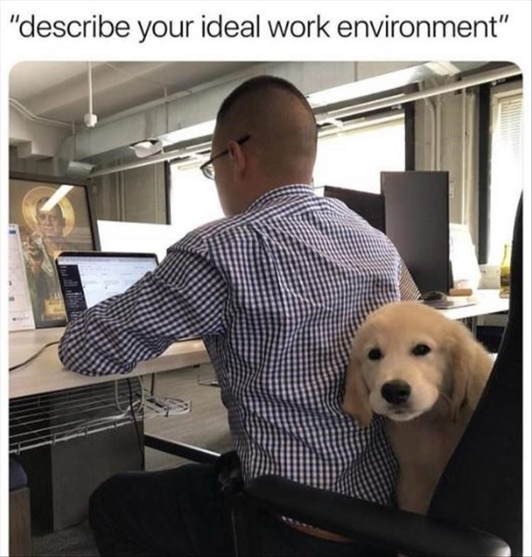 """dog meme - Dog - """"describe your ideal work environment"""""""