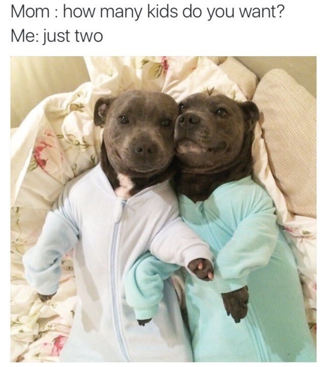 dog meme - Dog - Mom how many kids do you want? Me: just two