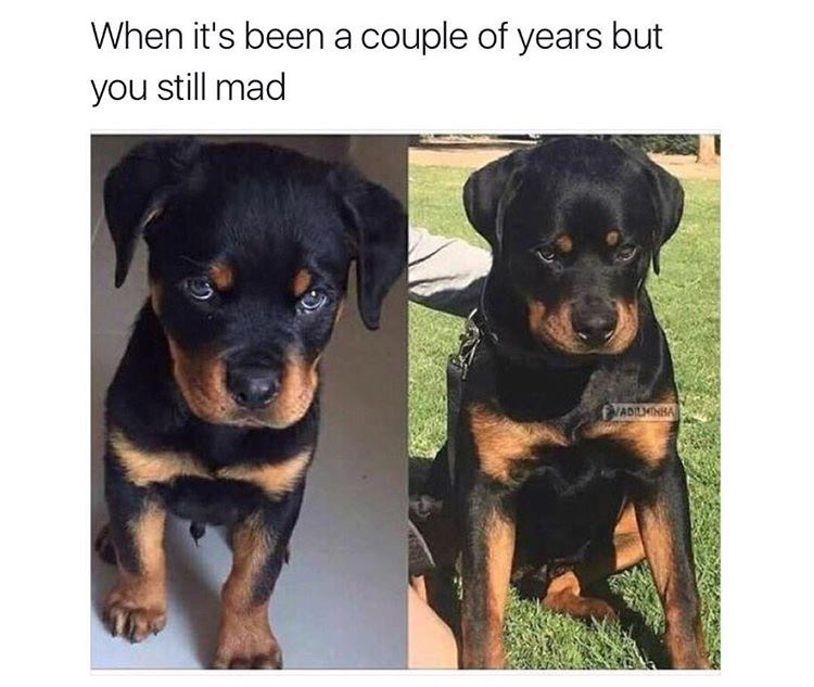 dog meme - Dog - When it's been a couple of years but you still mad VADILMINBA