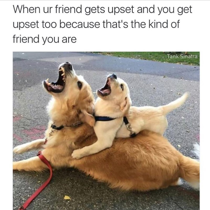 dog meme - Dog breed - When ur friend gets upset and you get upset too because that's the kind of friend you are Tank Sinatra