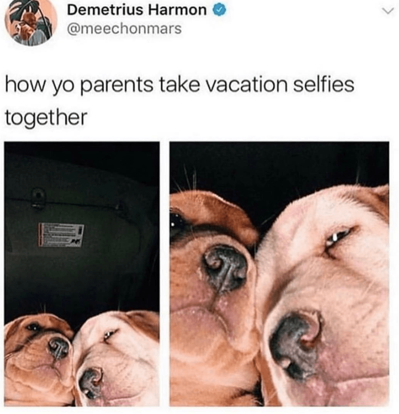 dog meme - Dog - Demetrius Harmon @meechonmars how yo parents take vacation selfies together