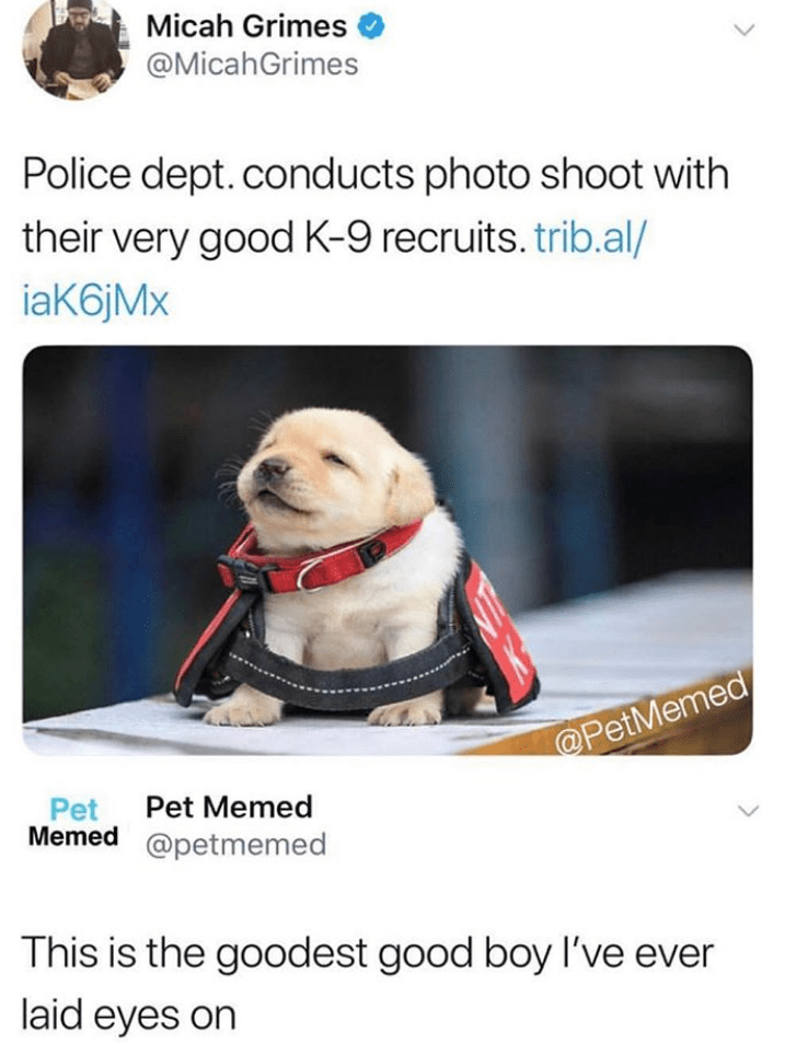 dog meme - Product - Micah Grimes @MicahGrimes Police dept. conducts photo shoot with their very good K-9 recruits. trib.al/ iaK6jMx @PetMemed Pet Pet Memed Memed @petmemed This is the goodest good boy I've ever laid eyes on