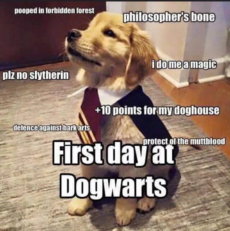dog meme - Dog breed - pooped in forbidden forest philosopher's bone idomeamagic plzno slytherin +10 points for my doghouse defence againstbarkkarts protect of the mutthblood First day Dogwarts