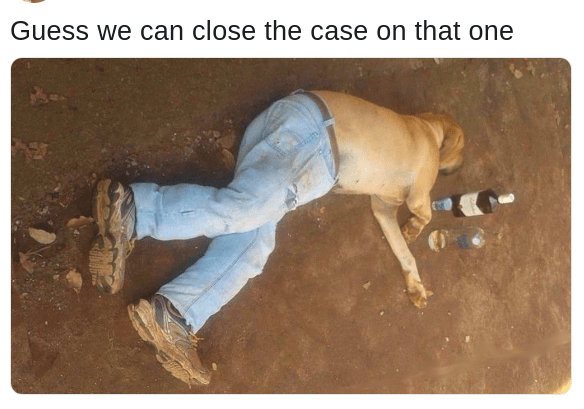 dog wearing pants case solved