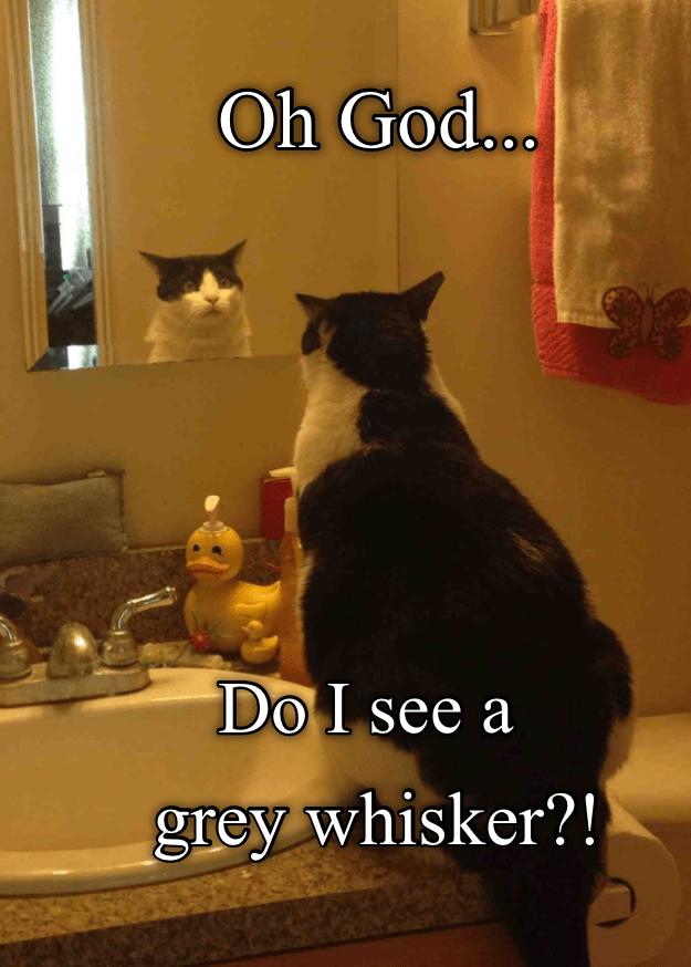 Cat - Oh God... Do I see a grey whisker?!