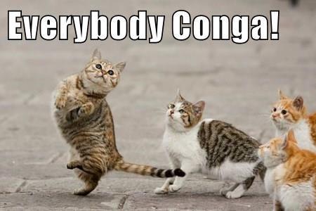 Cat - Everybody Conga!