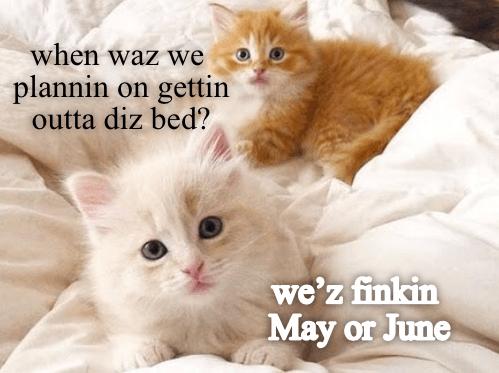 Cat - when waz we plannin on gettin outta diz bed? we'z finkin May May or June