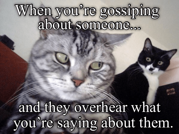 Cat - When you're gossiping about someone... and they overhear what you re saying about them.