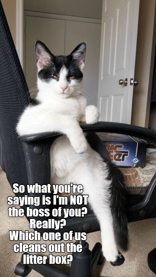 Cat - So what you're saying is I'm NOT the boss of you? Really? Which one of uS cleans out the litter box?