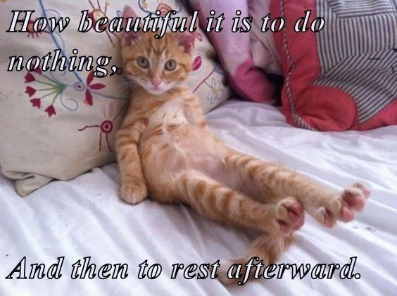 Cat - Haw Beautifulit is to do nothing And then to rest afierward.