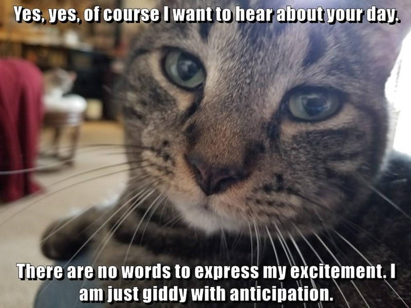 Cat - Yes, yes, of course I want to hear about your day. There are no words to express my excitement, I am just giddy with anticipation.