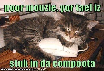 Cat - poormouzie or tael iz stukin da compoota eANHRSCHEE2EURGER COM