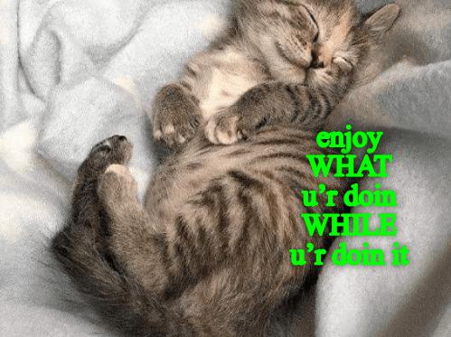 Cat - enjoy WHAT u'rdom WHLB u'rdein it