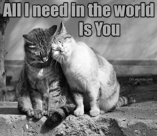 Cat - AllIneed in the world Is You DR.vikonda.com