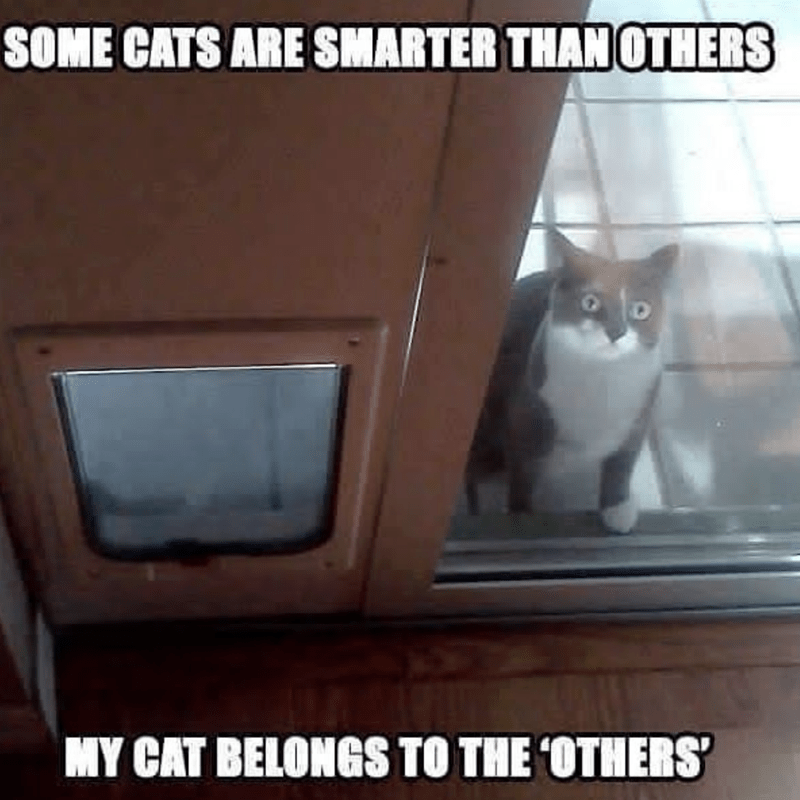 Cat - SOME CATS ARE SMARTER THAN OTHERS MY CAT BELONGS TO THE OTHERS