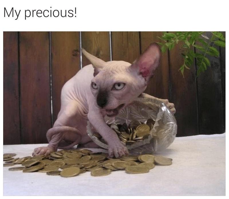Cat - My precious! 2AX