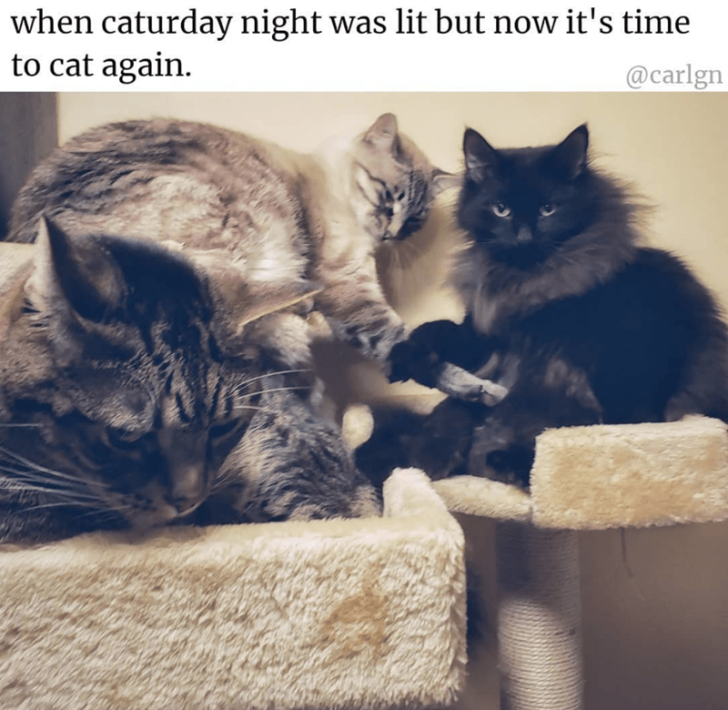 Cat - when caturday night was lit but now it's time to cat again @carlgn
