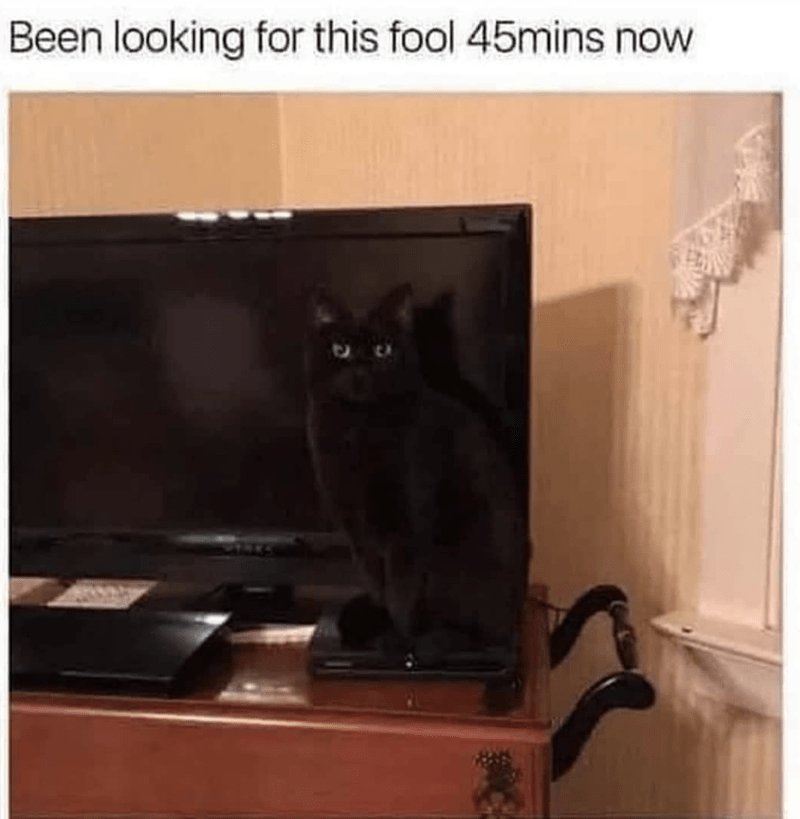 Cat - Been looking for this fool 45mins now