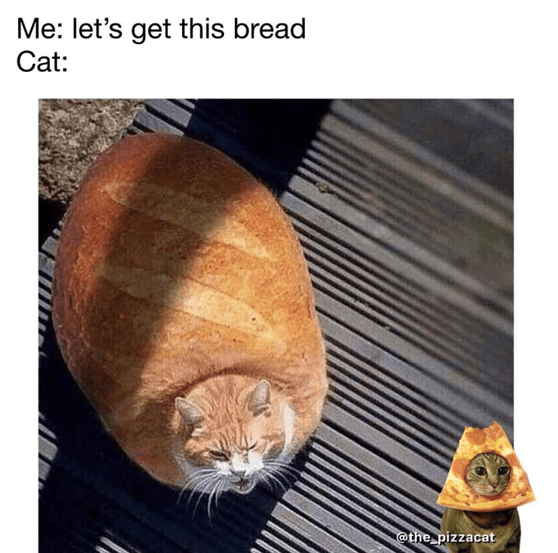 Cat - Me: let's get this bread Cat: @the pizzacat