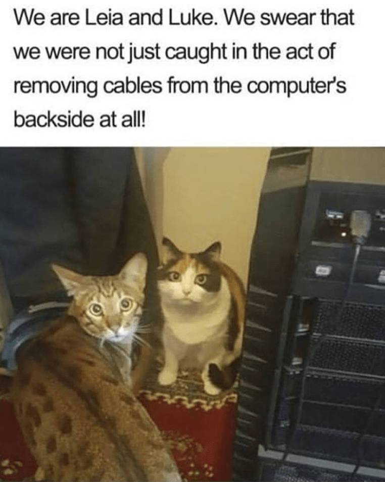 Cat - We are Leia and Luke. We swear that we were not just caught in the act of removing cables from the computer's backside at all!