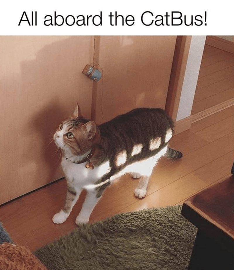 Cat - All aboard the CatBus!