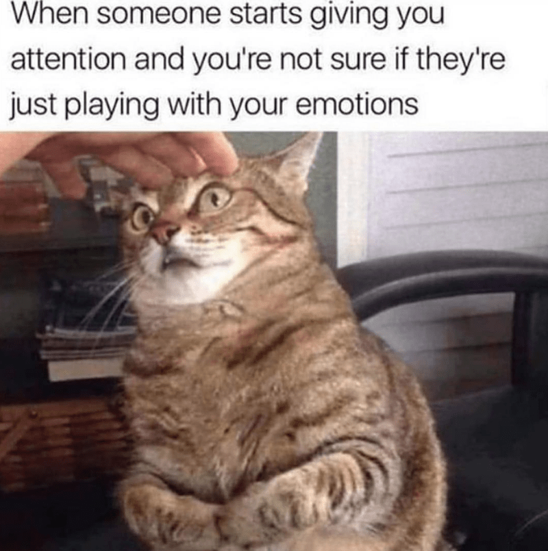 Cat - When someone starts giving you attention and you're not sure if they're just playing with your emotions