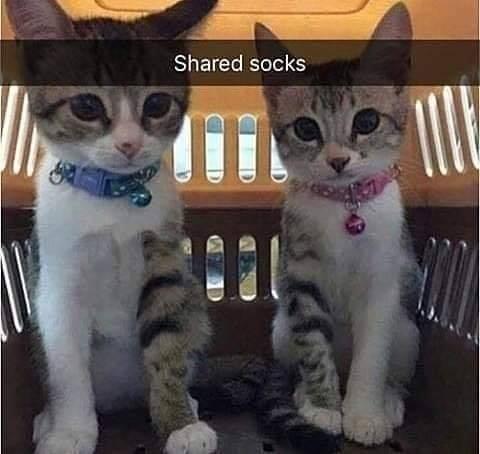 Cat - Shared socks