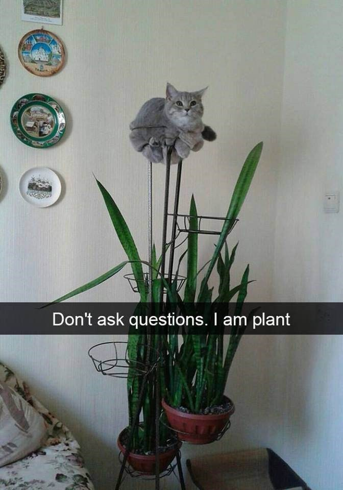 Flower - Don't ask questions. I am plant tr
