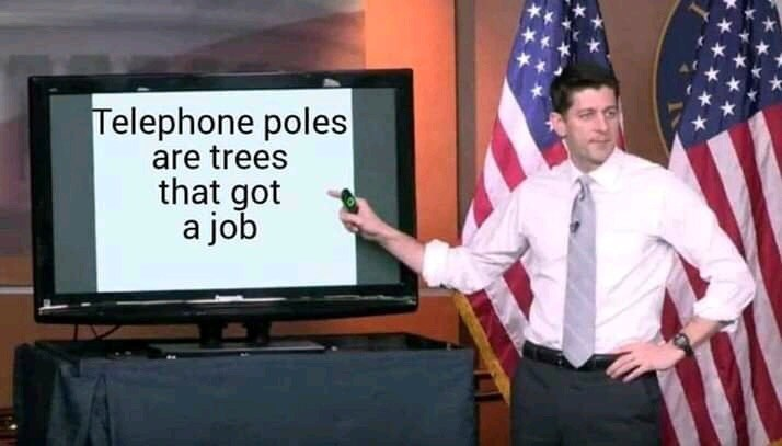 Official - Telephone poles are trees that got a job