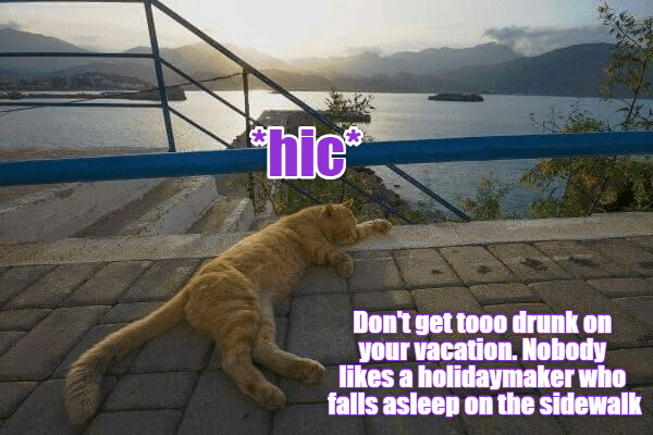 Cats on Holiday 101