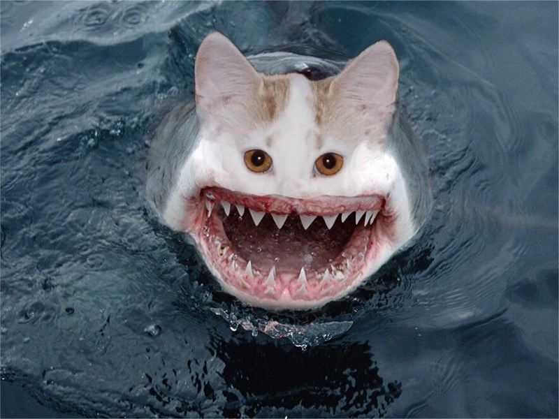 cursed image - shark with cat face