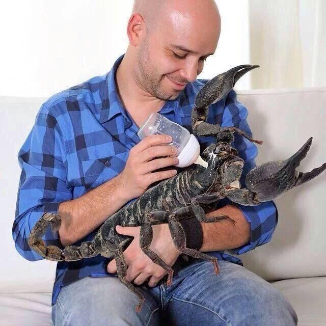 cursed image - Wildlife biologist