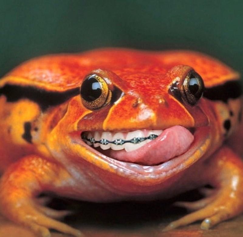cursed image - Frog with human teeth