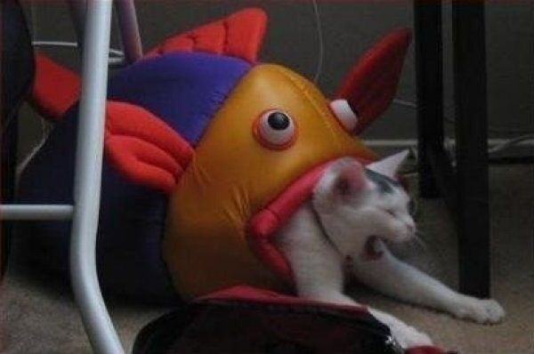 cursed image - Cat in a toy stuffed fish