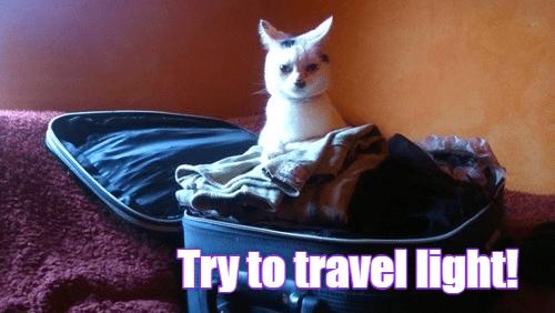 Cat Holidays 110