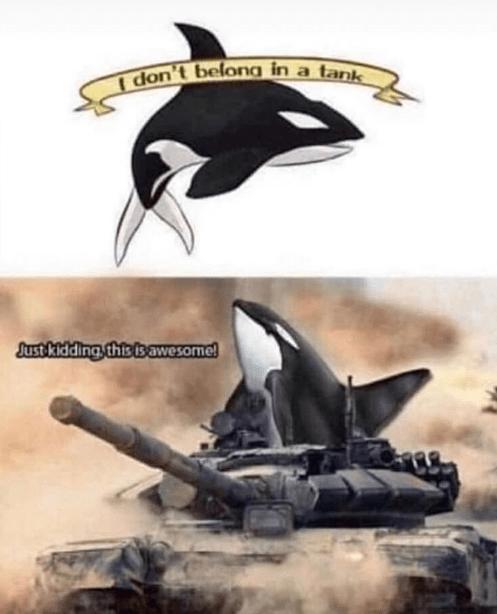 Funny meme, pun meme, killer whales, killer whale, orca, tanks.