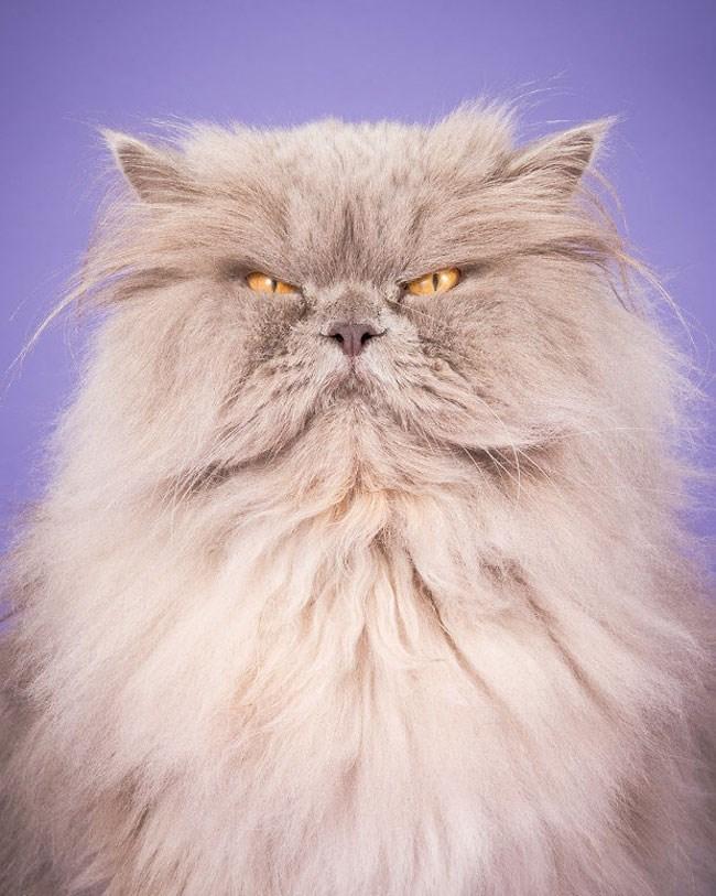 chubby cats - Cat