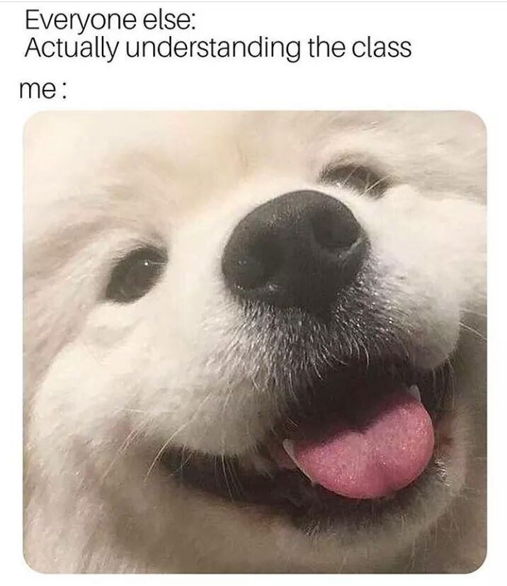 """Caption that reads, """"Everyone else: Actually understanding the class; Me: ..."""" above a pic of a cute fluffy dog looking confused"""