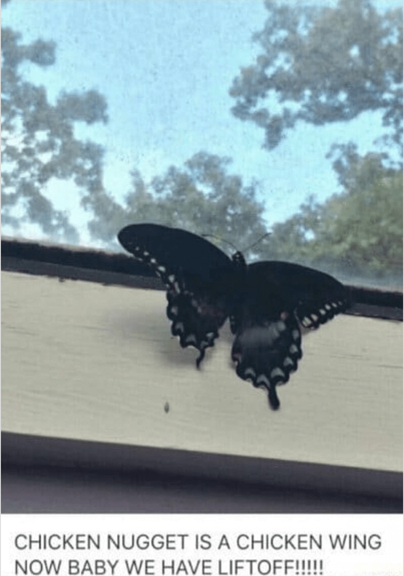picture of butterfly on window