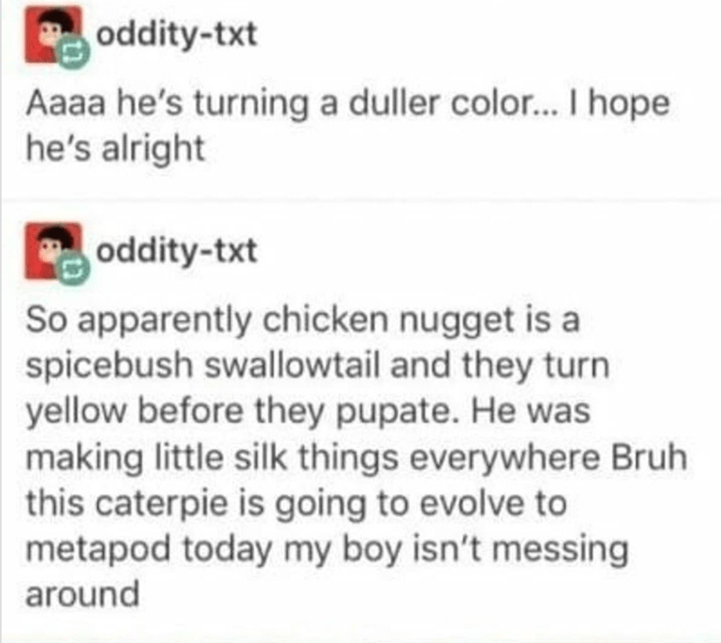 text from Tumblr about caterpillar
