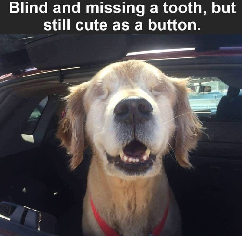 Dog - Blind and missing a tooth, but still cute as a button.