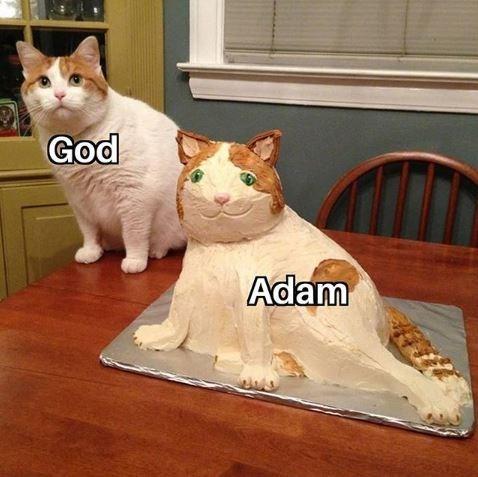 dank christian - Cat - God Adam