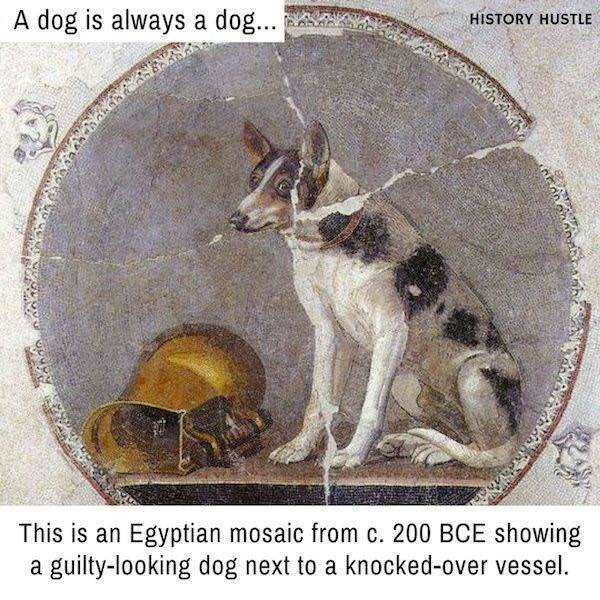 Canidae - HISTORY HUSTLE azc.conahah A dog is always a dog... This is an Egyptian mosaic from c. 200 BCE showing a guilty-looking dog next to a knocked-over vessel.