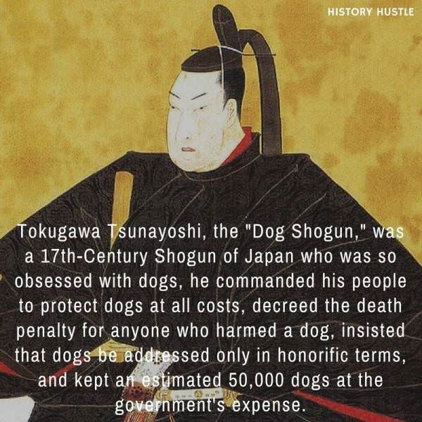 """Fictional character - HISTORY HUSTLE Tokugawa Tsunayoshi, the """"Dog Shogun,"""" was a 17th-Century Shogun of Japan who was so obsessed with dogs, he commanded his people to protect dogs at all costs, decreed the death penalty for anyone who harmed a dog, insisted that dogs be addressed only in honorific terms, and kept an estimated 50,000 dogs at the government's expense."""