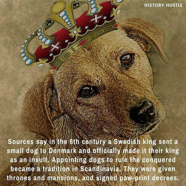 Dog - HISTORY HUSTLE Sources say in the 6th century a Swedish king sent a small dog to Denmark and officially made it their king as an insult Appointing dogs to rule the conquered became a tradition in Scandinavia. They were given thrones and mansions, and signed paw-print decrees.